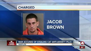 Man Accused of Stealing Cat Anti-Anxiety Pills - Video
