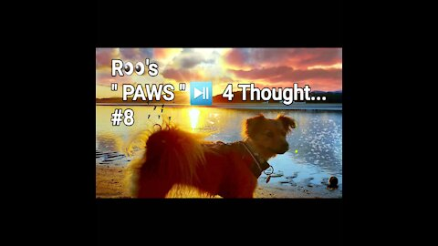 ' PAWs ' ⏯ 4 Thought...