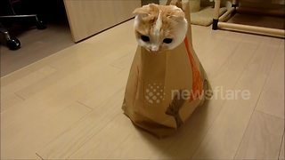 Cute cat likes hiding in paper bag - Video