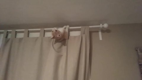 Goofy cat decides to chill out in extremely odd place