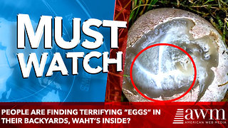 "People Are Finding Terrifying ""Eggs"" in Their Backyards - Video"