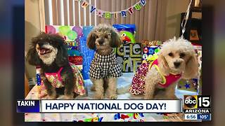 Happy national dog day! - Video