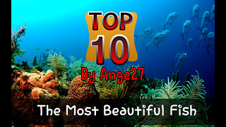 Top 10 - The most beautiful fish