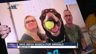 Mega March for Animals Detroit - Video
