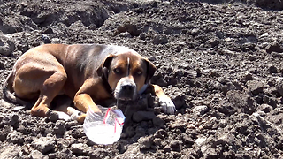 Abandoned dog in a construction site wouldn't move because he was so scared. - Video
