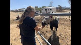 Rebuilding the Jamul horse rescue that burned in the Valley Fire