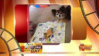 Art's Cameras Plus Picture of the Day for July 3! - Video