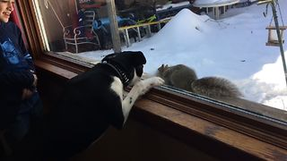Dog Fails To Scare Squirrel - Video