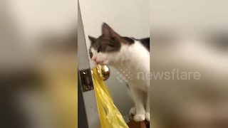 Cat tries to fit entire door knob into her mouth - Video