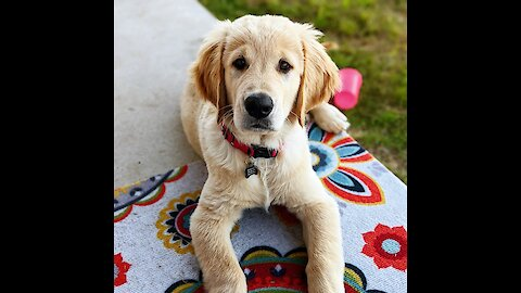 Check out this puppy's adorable dive into a ball pit