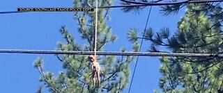 Black doll found hanging from power lines in CA