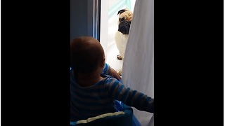 Giggling baby plays peekaboo with pug