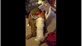 Dog gently rocks baby for comfort - Video