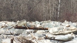 Major Ice, Logs Build up on White Fox River, Saskatchewan - Video