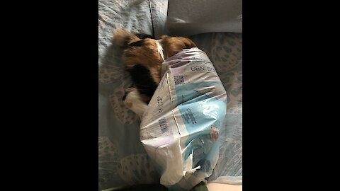 Funny kitten slow motion jump into the bag