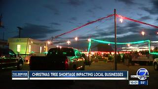 Christmas tree shortage has family-owned lots worried about future - Video