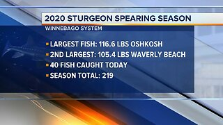 Day 8: Sturgeon Spearing season latest numbers