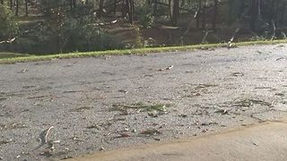 Trees Torn Down by Possible Tornado in Spartanburg - Video