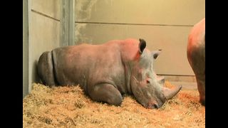 Rhinos Taught English - Video