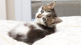 Stop Believing These Myths About Cats