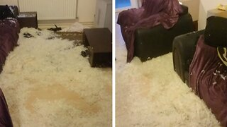 In The Dog House! Couple Buy Their Fifth Couch In As Many Years Because Pet Dogs Destroy Every Sofa