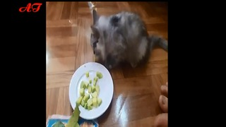 Kittens eat avocados, believe it?  - Video