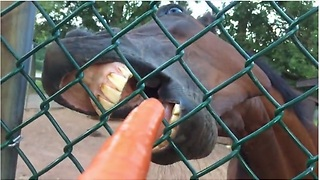 First Ever Footage Of Animal Feeding From Vegetable's Perspective! - Video