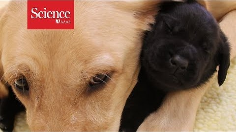 Coddled puppies make poor guide dogs