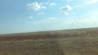 Swarm of locusts flies through Russian region - Video