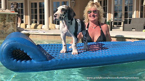 Great Dane puppy enjoys his first ride on pool floatie