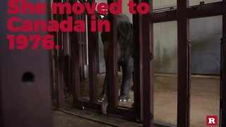 Meet the National Zoo's mama elephant | Rare Animals - Video