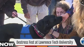De-stress Fest at Lawrence Tech University - Video