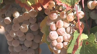 Idaho wine industry blooms after four generations - Video