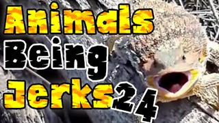 Animals Being Jerks #24 - Video