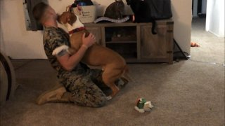 U.S. Marine returns home from deployment to surprise his dog