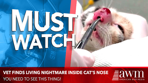 Vet Can't Believe What She Finds In Swollen Cat's Nose