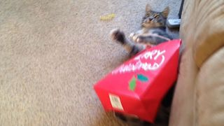 Cat Regrets Opening Christmas Present Early - Video