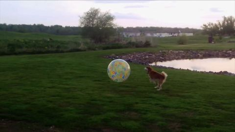 14 Dogs Who Are Loving Life