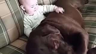 Dog and baby share precious moment together - Video