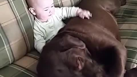Dog and baby share precious moment together