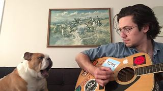 Winston the Bulldog sings during owner's guitar session - Video