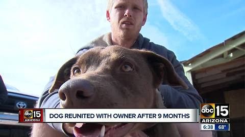 Dog reunited with owner after 9 months