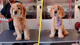 Senior Cocker Spaniel Mix, Left at Shelter When Owner Died, Gets Transformation  - Video