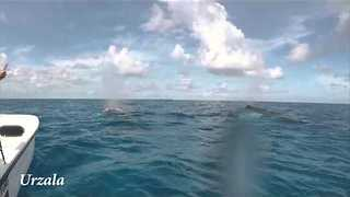 Couple Encounter Humpback Whales During Sailing Trip - Video
