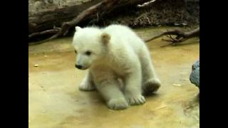 Anuri The Baby Polar Bear - Video