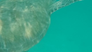 SEA TURTLE CLOSE ENCOUNTER!