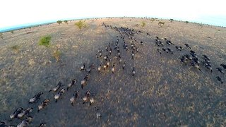 Drone Footage Shows Incredible Views Of Serengeti Wildlife - Video
