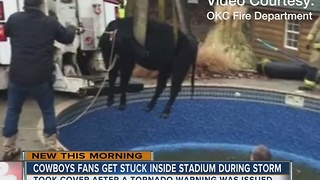 Cow rescued from OKC swimming pool - Video
