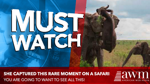 Woman Captures Rare Moment While On African Safari. Quickly Uploads Footage Online