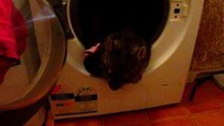 Warra the Wombat Finds Himself Stuck in Washing Machine - Video